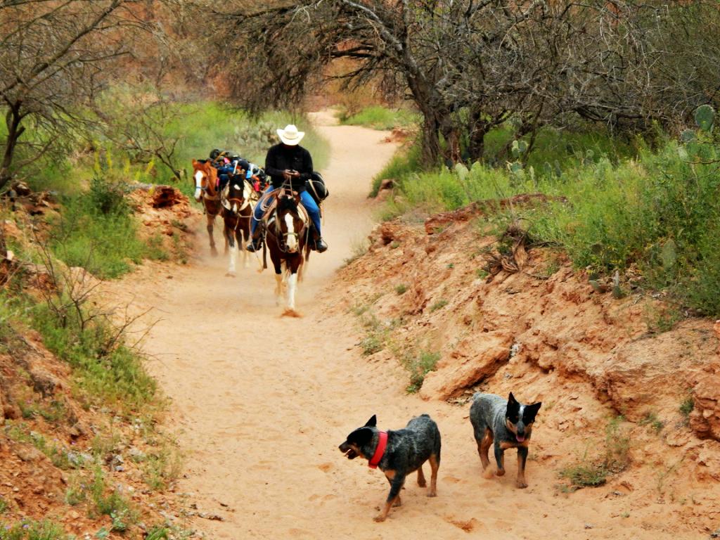 mules-carry-camping-gear-havasupai-hiking-trail
