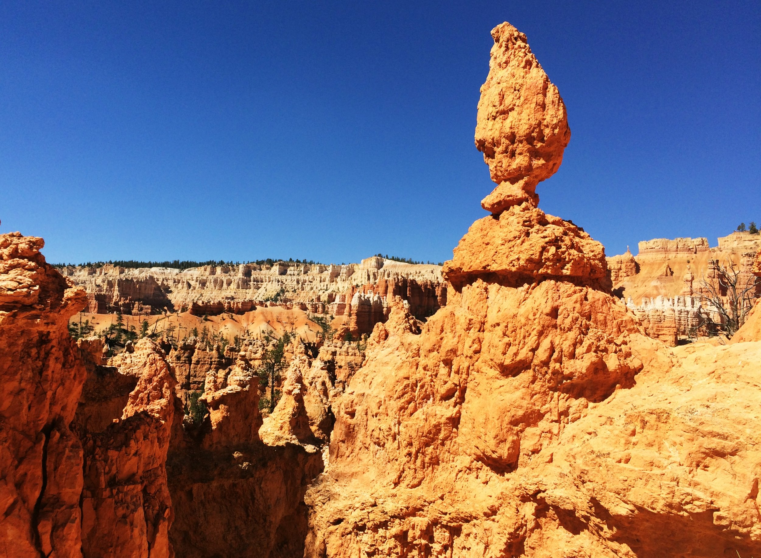 bryce-national-park-mid-day-summer