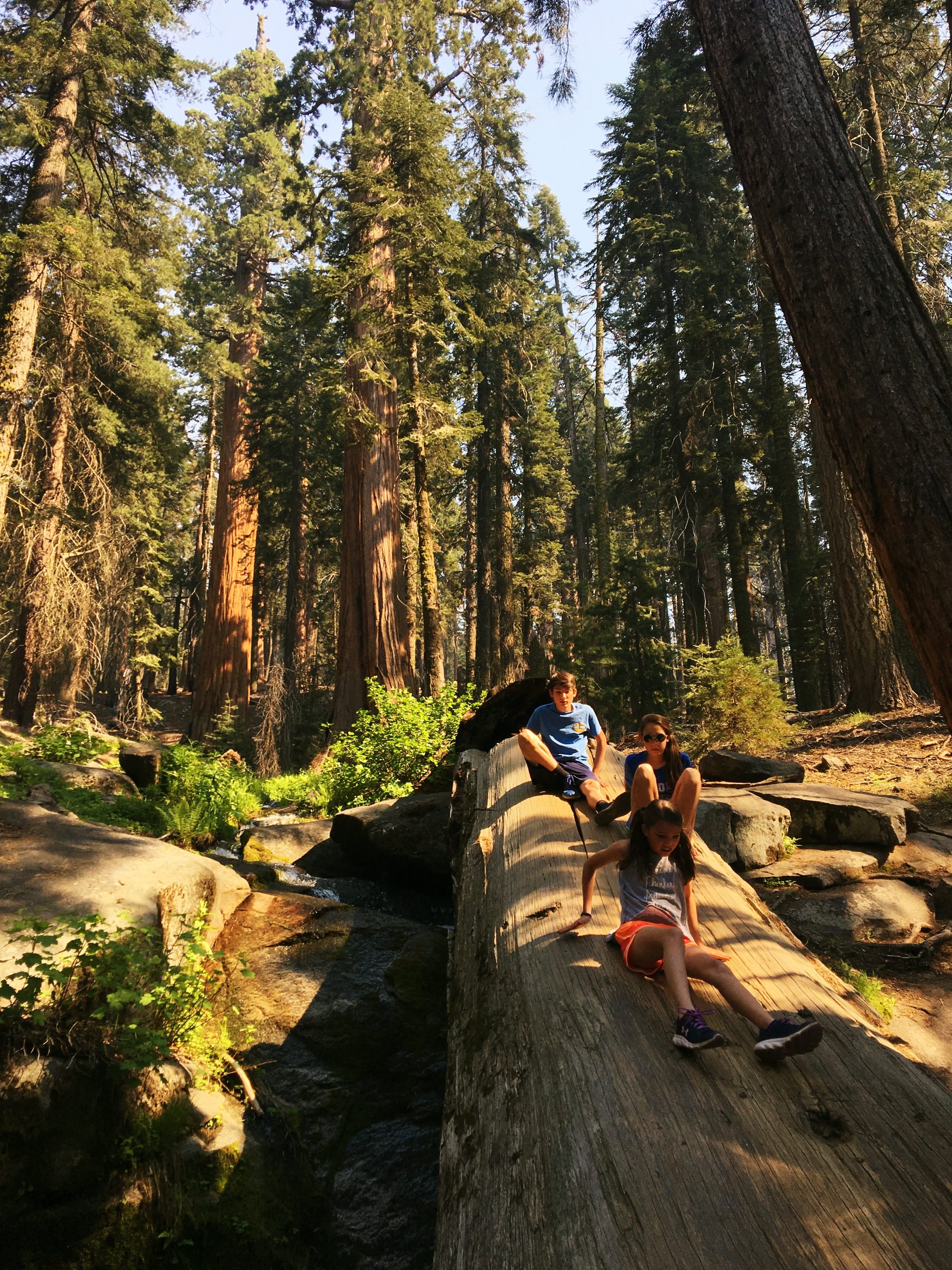 sequoia-national-park-congress-trail-with-kids
