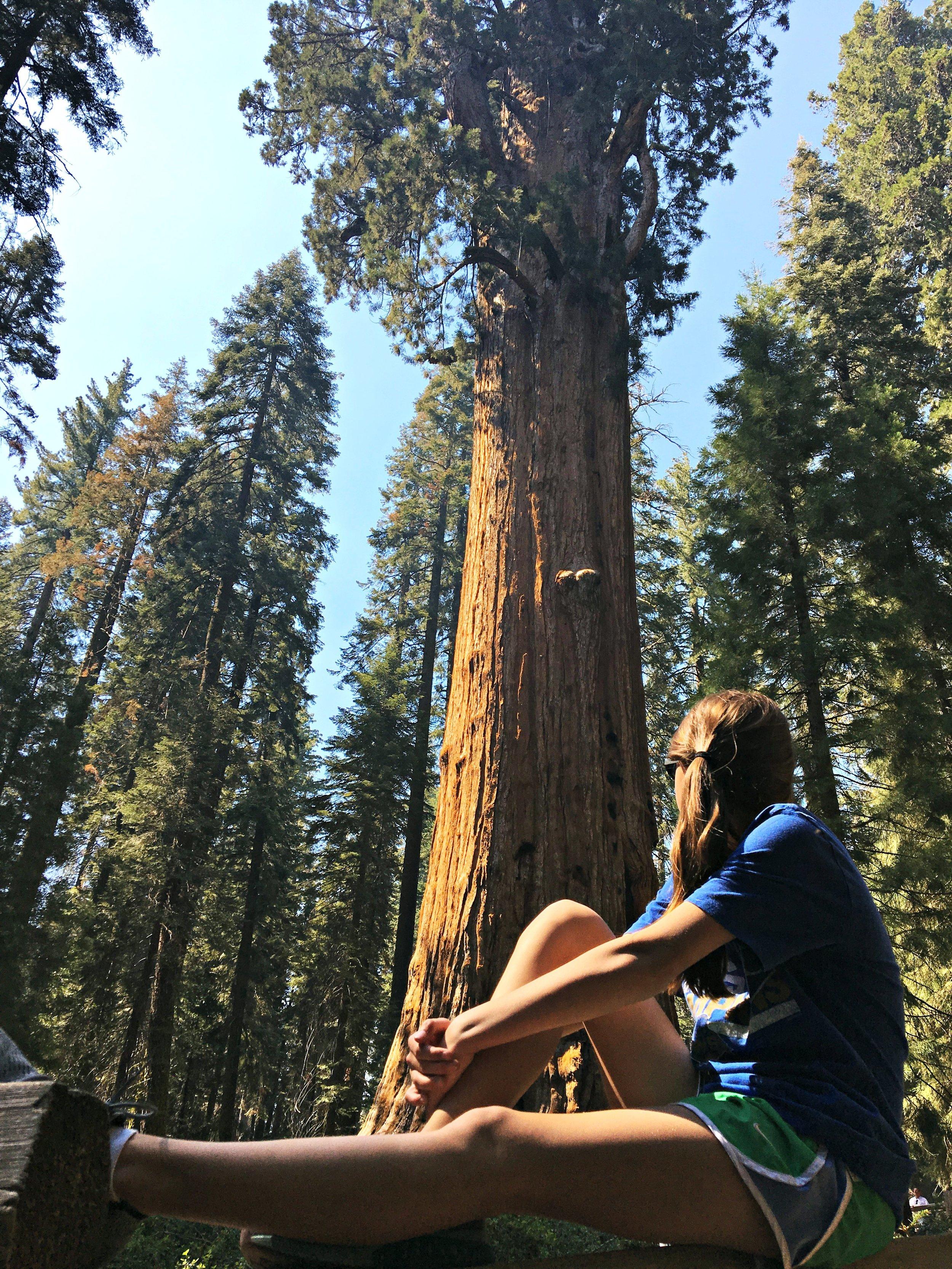 gazing-up-general-sherman-giant-sequoia