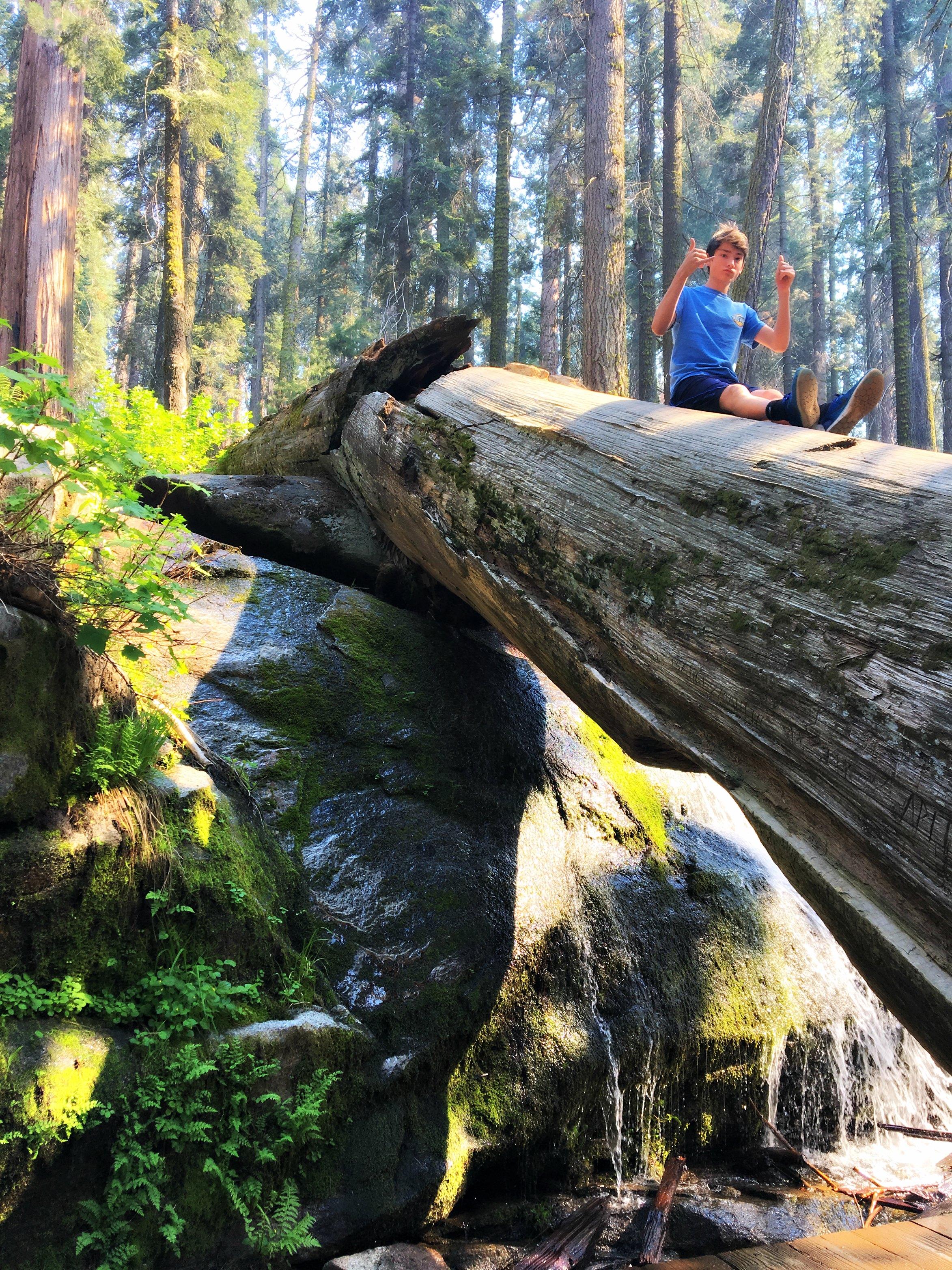 congress-trail-sliding-down-sequoia