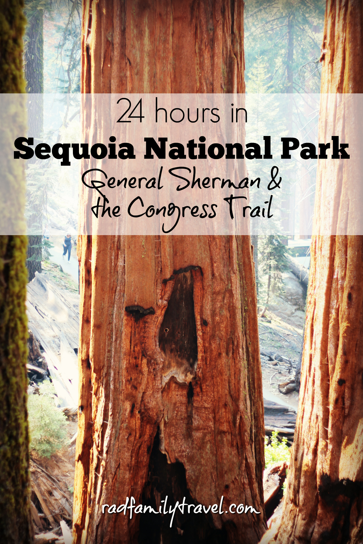day-trip-sequoia-national-park-with-kids