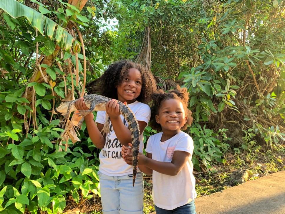 miami-learn-about-alligators