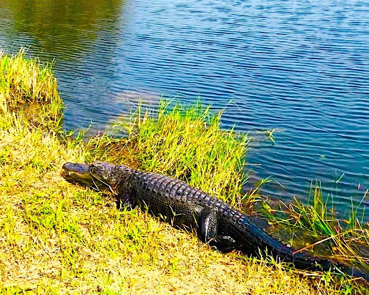 Everglades National Park (photo: Family Travel Lifestyle)