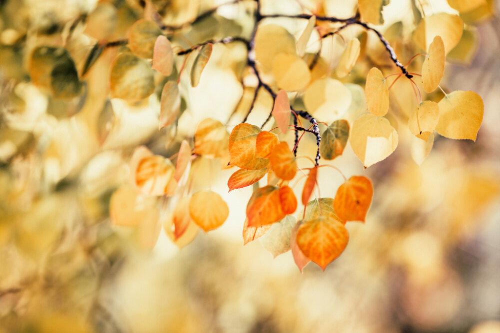 frisco-colorado-fall-color