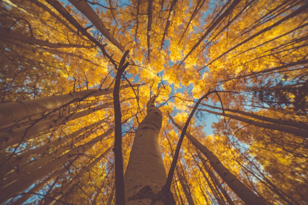 vail-colorado-fall-colors