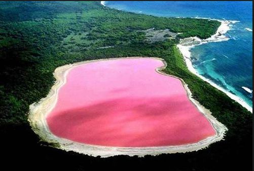 Lake Hillier, Australia     via  universomarino   I had to find out what makes Lake Hillier this amazing pink color.  The information below is from  Wikipedia  -   The only living organisms in Lake Hillier are microorganisms including   Dunaliella salina  , which causes the salt content in the lake to create a red dye which helps produce the colour, as well as red  halophilic  bacteria present in the salt crusts.