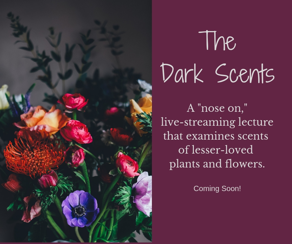 The Dark Scents -- aromatherapy.jpg
