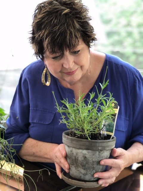 """Admiring a fragrant lavender plant . Even when it's not in bloom, lavender will freely share its scent. Gently """"pet"""" lavender's velvety leaves to subtly release some of its fragrant oil onto your fingertips."""