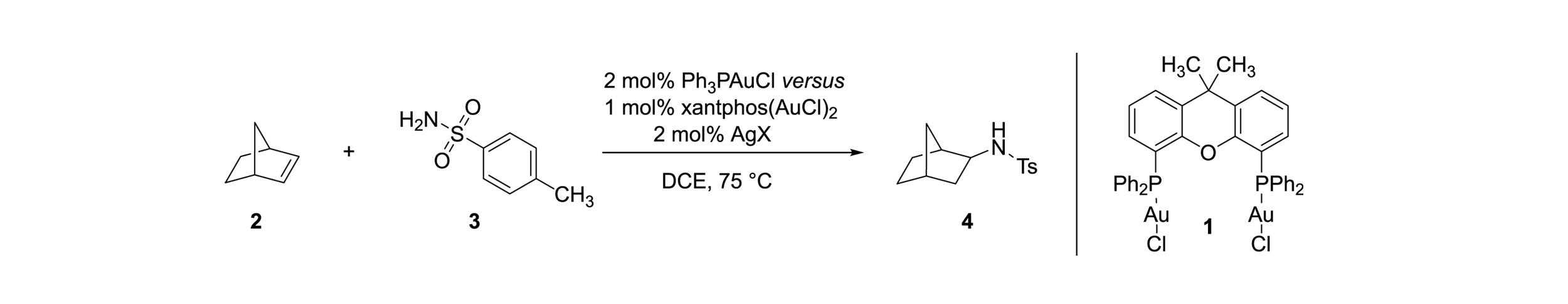Scheme 1.  Mono- vs. dinuclear gold catalyzed intermolecular hydroamidation of norbornene.[1]