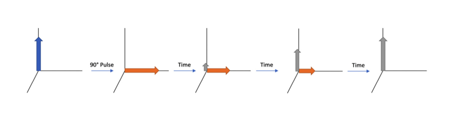 Figure 2. Schematic showing the relaxation of magnetization after a 90° pulse. Relaxation in the z-axis is represented by the grey arrow while relaxation in the xy-axis is represented by the orange arrow. [4]