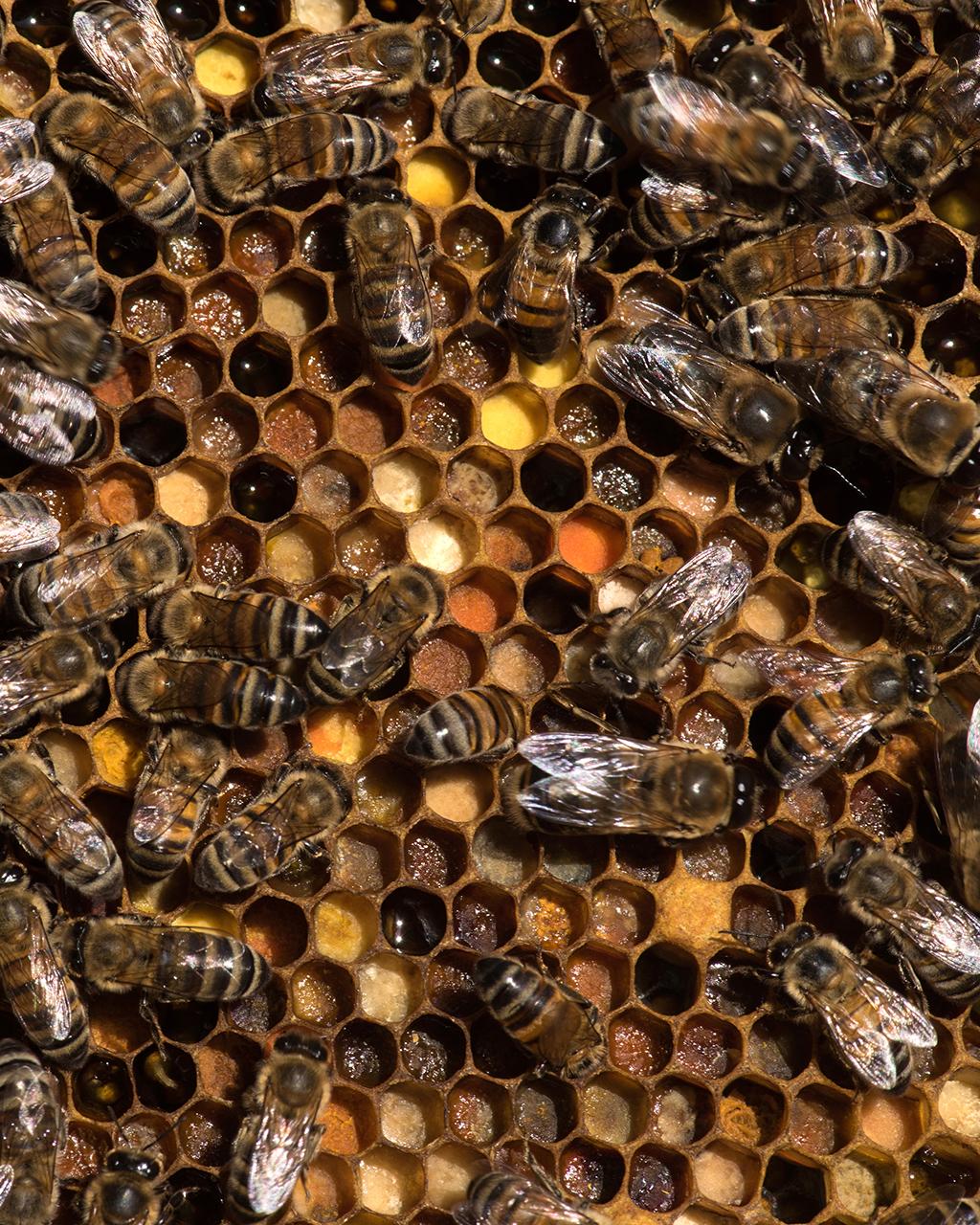 Pollen Stores