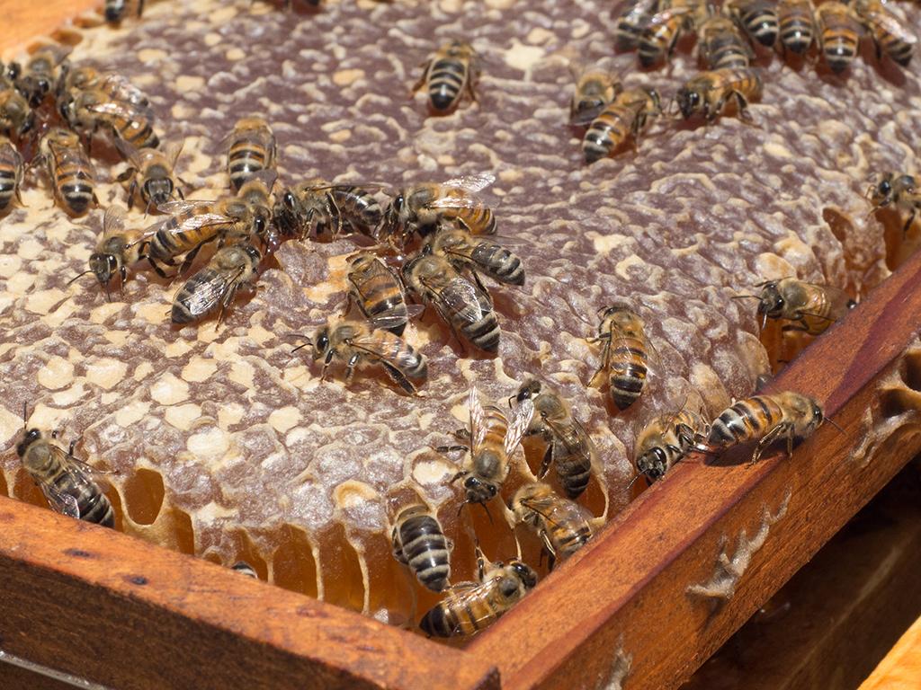 Capped Honey Comb