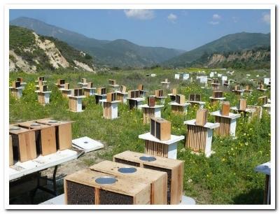 Beekeepers hives