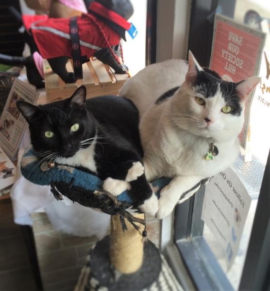 Sirius Black and Dottie Pet Snobs Philly