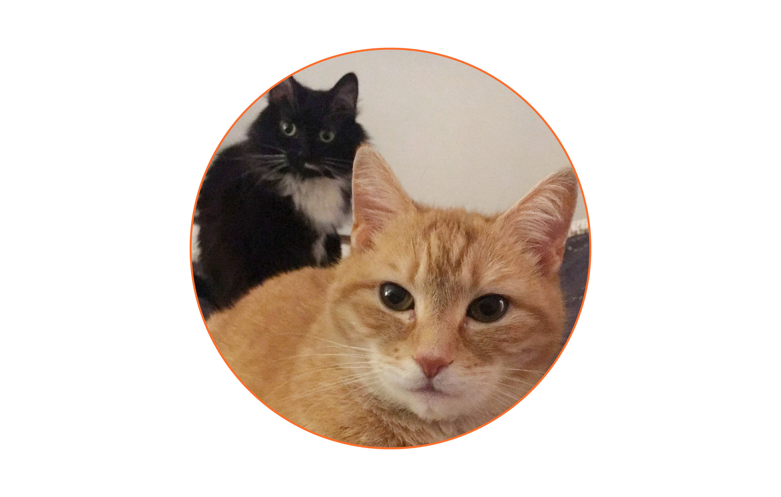 What two things would you take on a desert island? - My two cats.