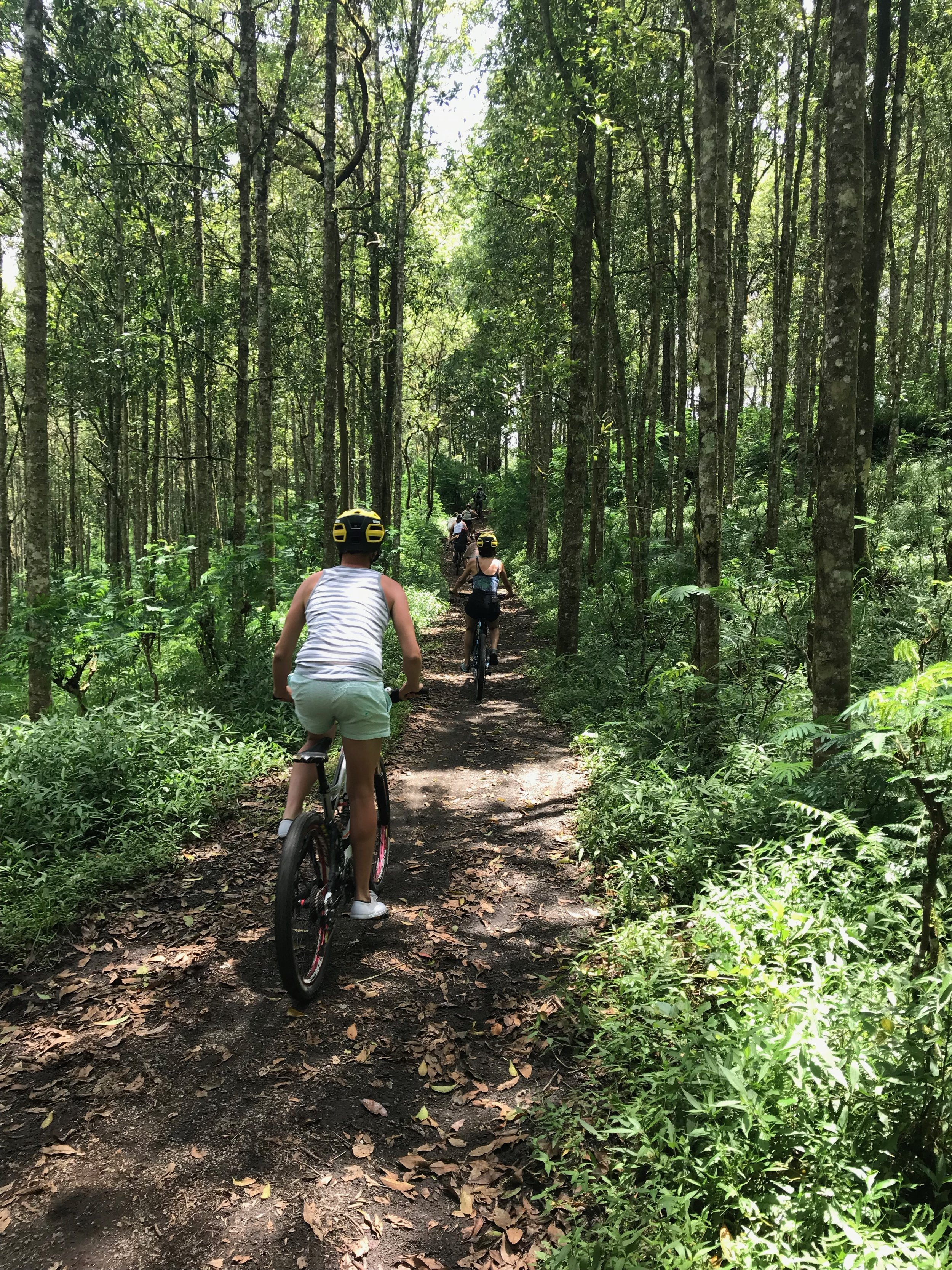 Jungle & Village Bike Tour.JPEG