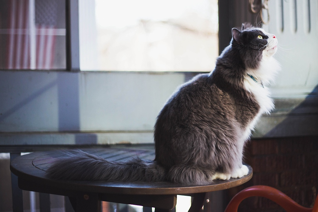 14 Very important business lessons that I learned from my cat!