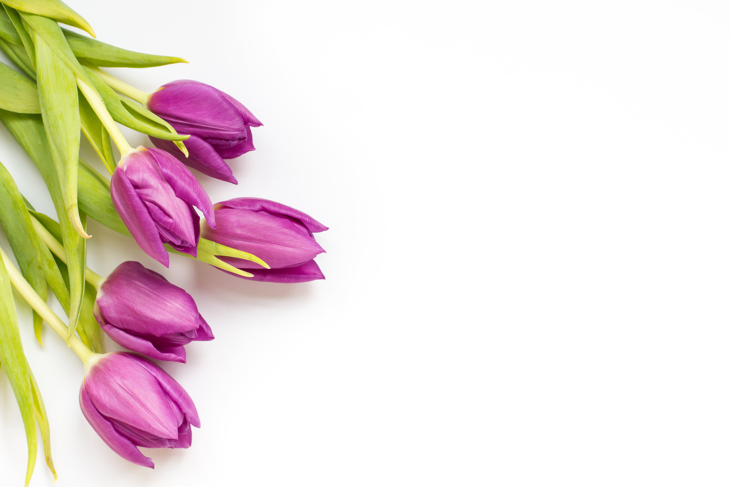 hc-styled-stock-tulips-gold-accents-9.jpg