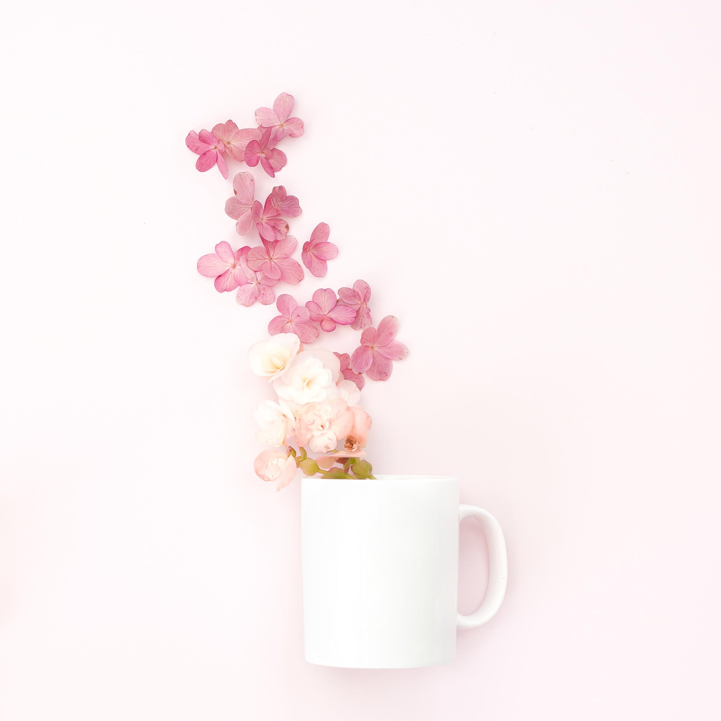 haute-stock-photography-pink-chic-final-18.jpg