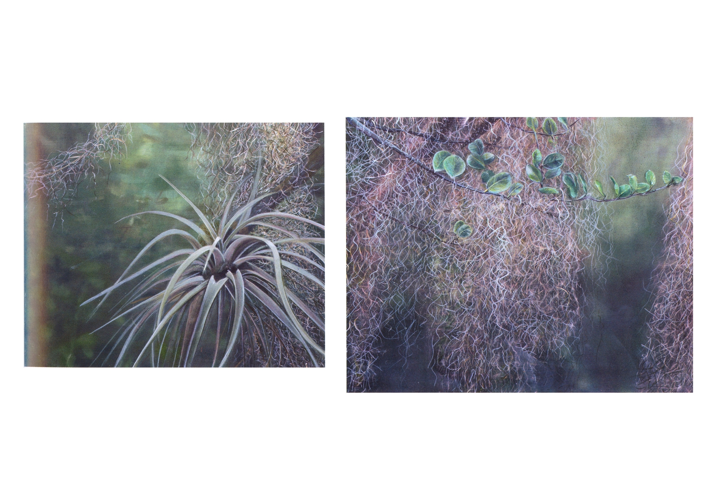 (Left)   Air Plant  , Oil on canvas, 20'' x 24'', 2003 (Right)   Moss and Leaves  , Oil on canvas, 22'' x 28'', 2004