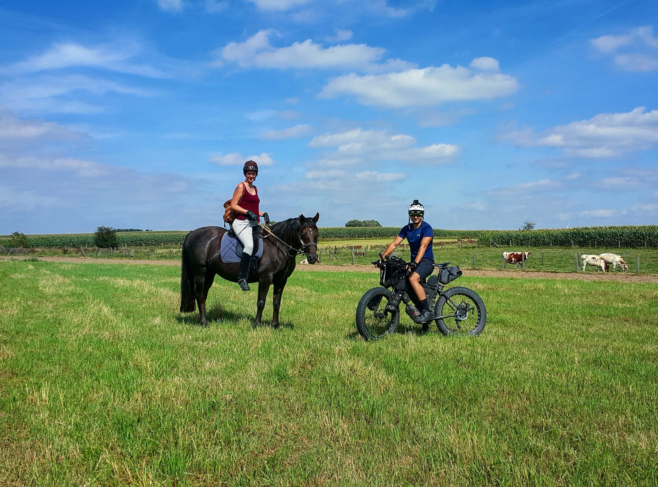 Taking the steeds out through the fields.