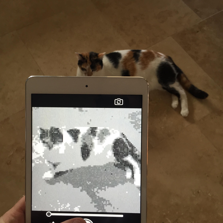 18_5ppi_catapp.jpg