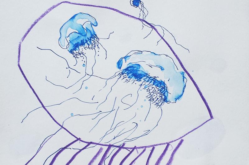 arctic-swim-drawing-6.png