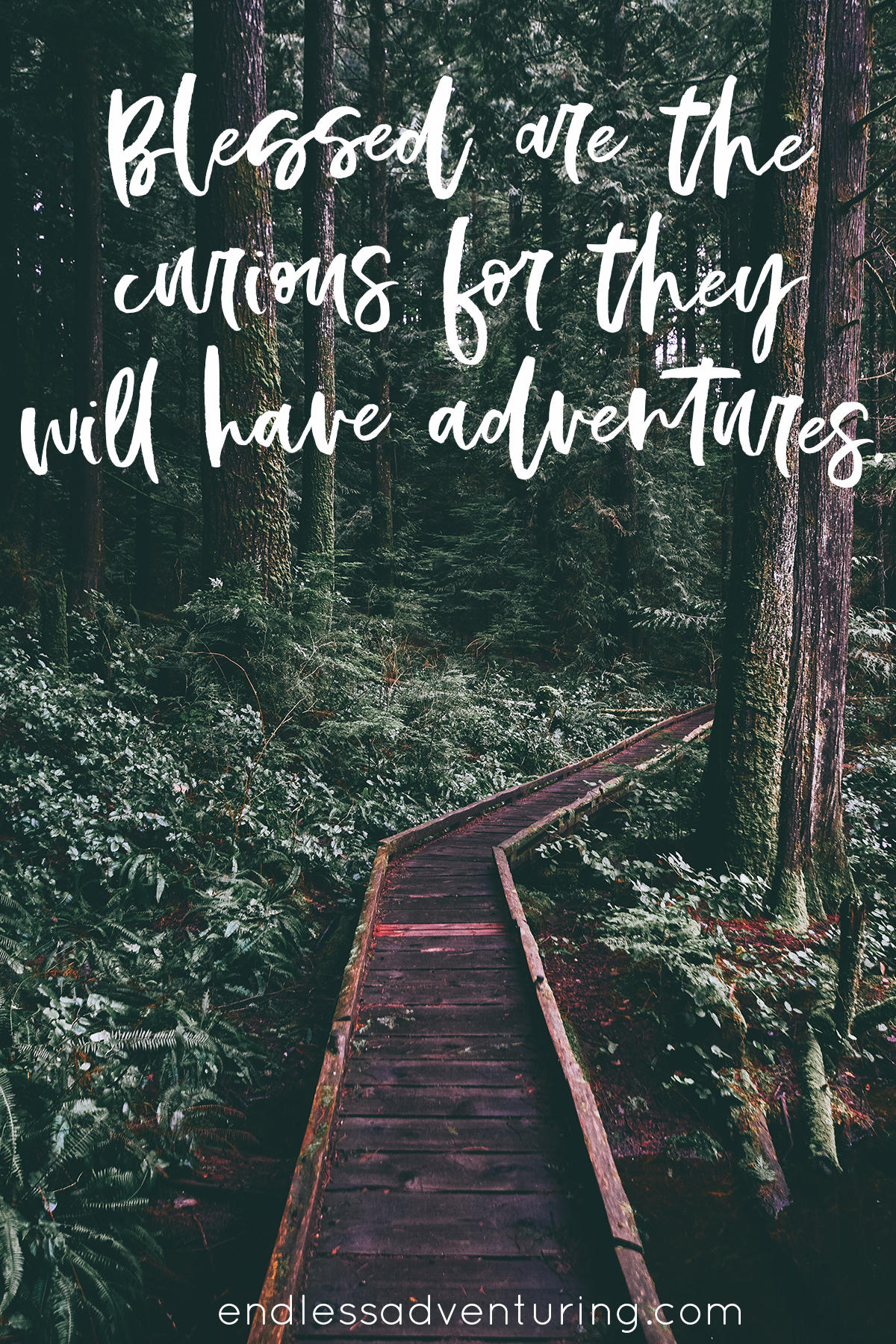 Aventure Quote - Blessed are the Curious for They Will Have Adventures