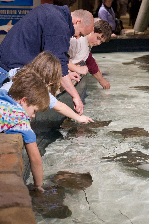Georgia_Aquarium_Petting_Tank_-_January_2006.jpg