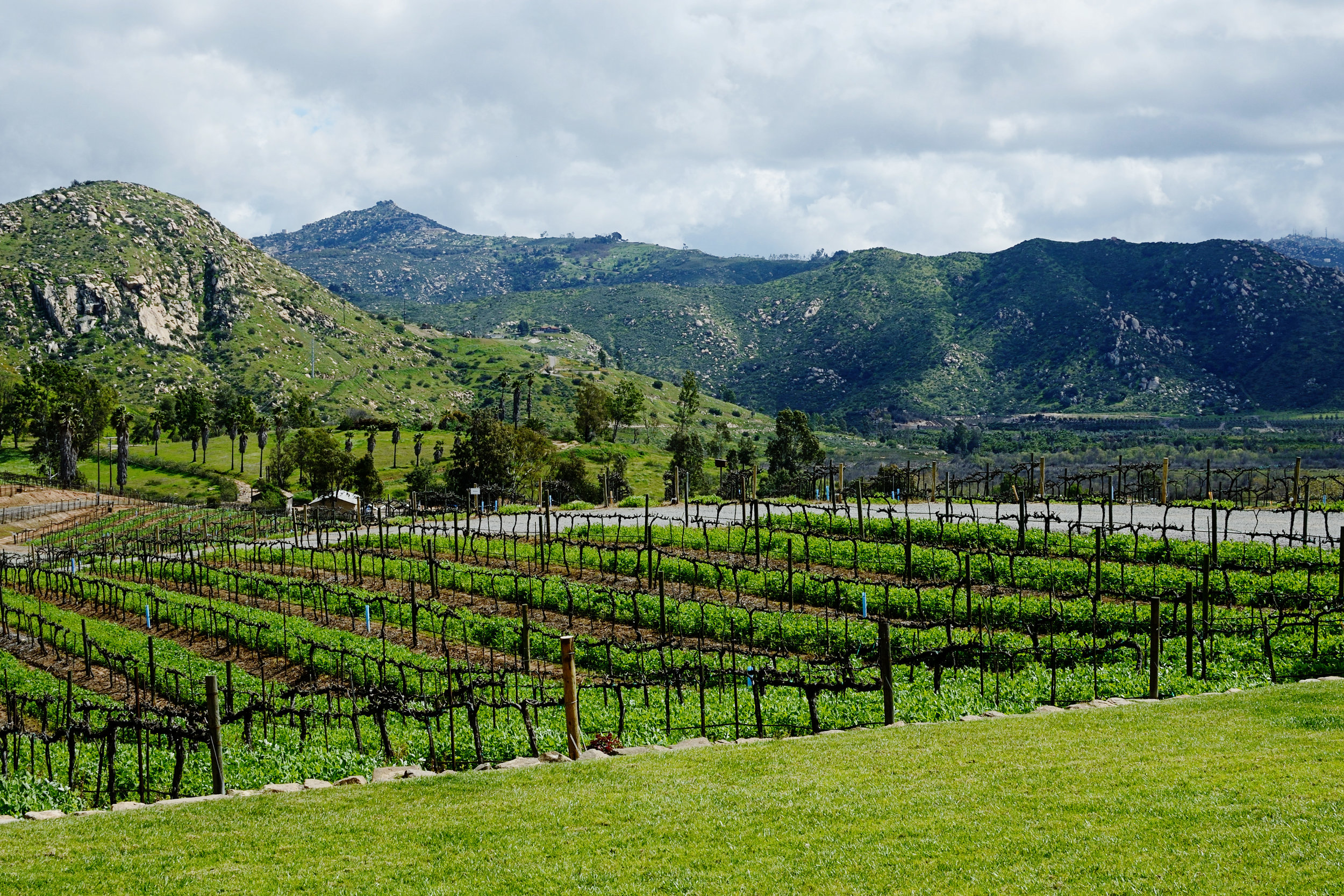 Lifestyle Winery 9363 by maria pablo.JPG
