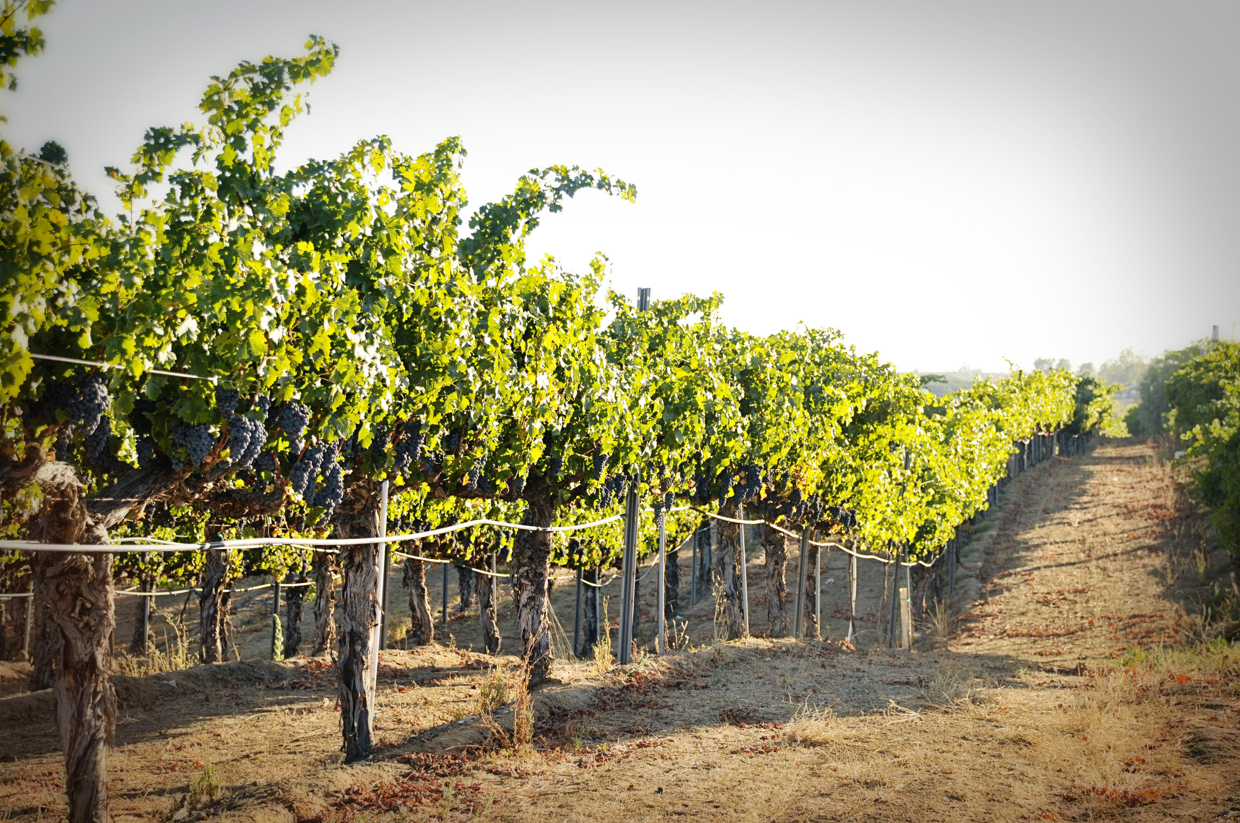*Winery 9234 by maria pablo.jpg