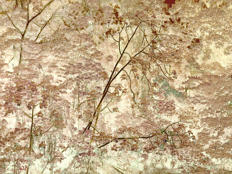 "Tiputini River, Bending Tree   30"" x 40"", 2009"