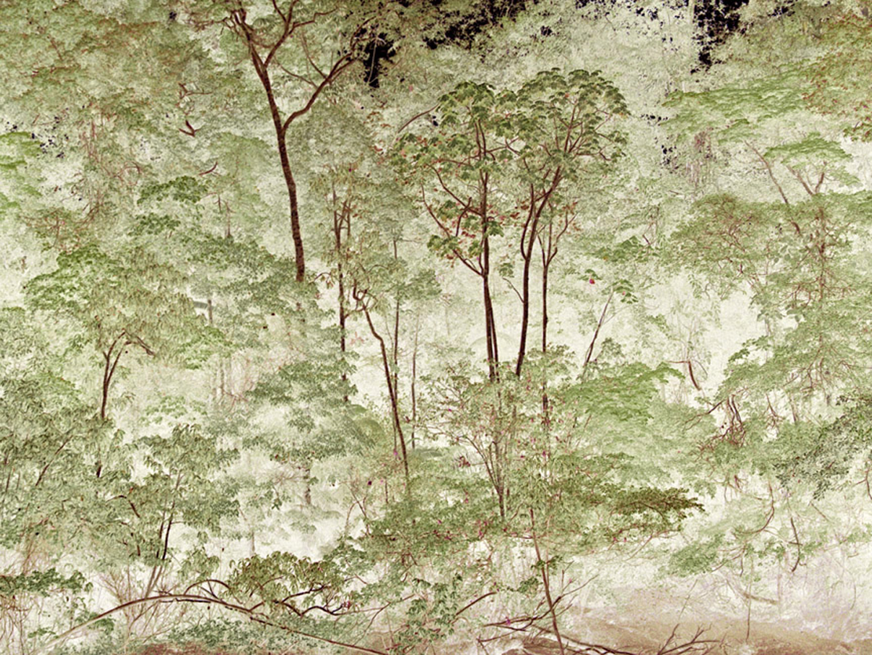 """Tiputini River,  High Trees   30"""" x 40"""", 2009"""