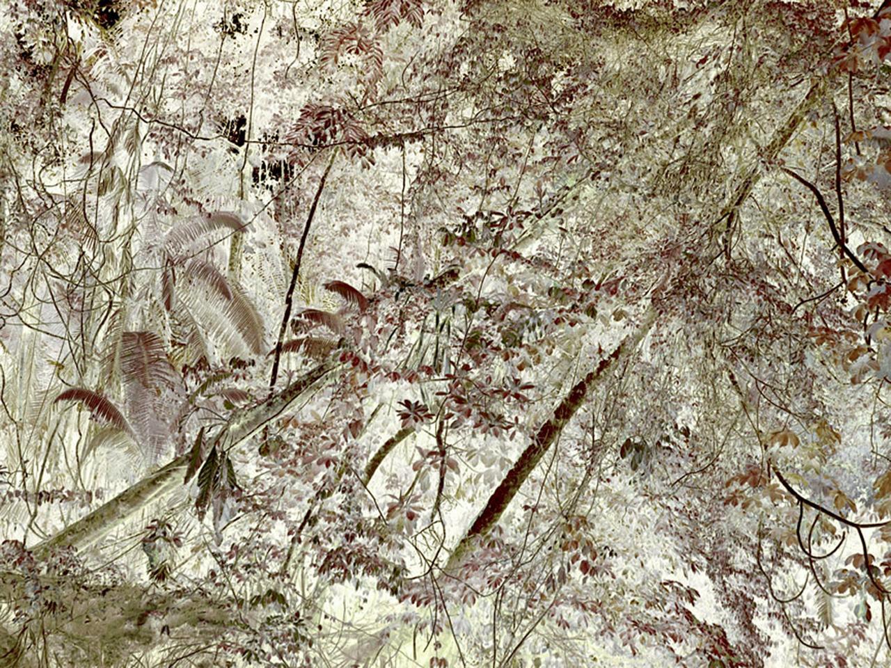 "Tiputini River,  Leaning Trees   30"" x 40"", 2009"