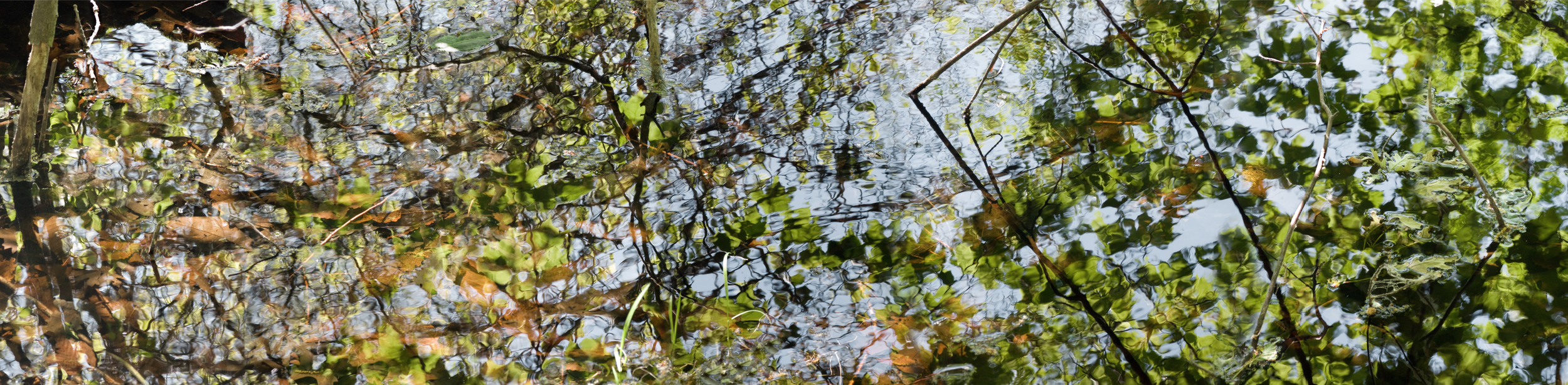 """May 9 Pond,  20"""" x 80"""", 2015"""