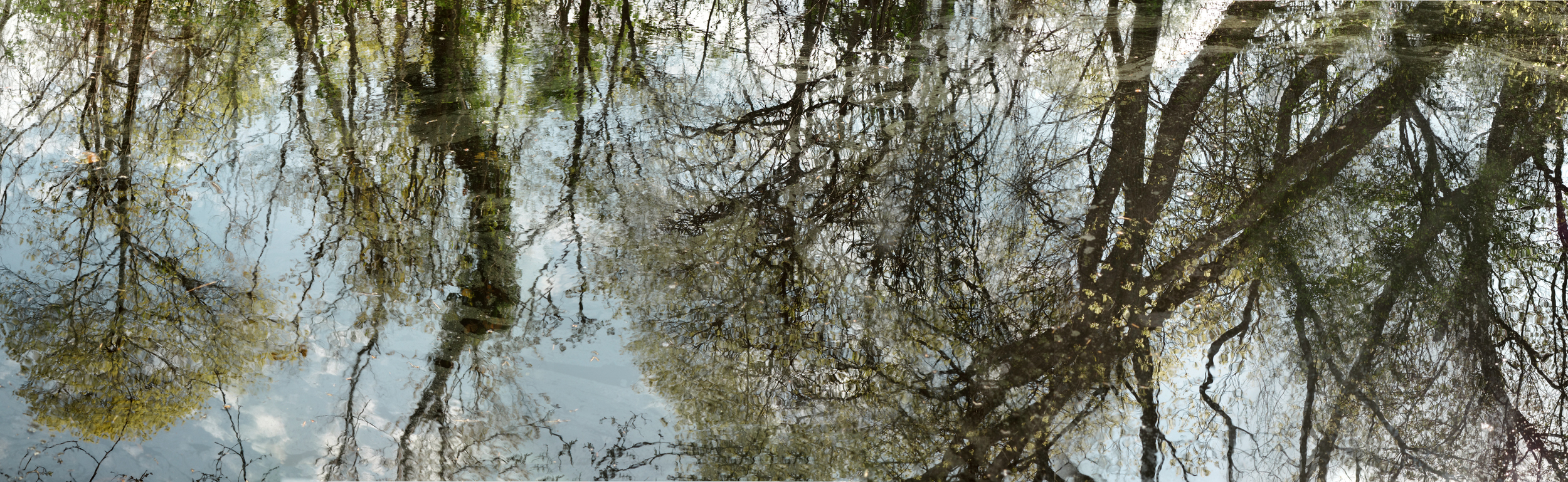 """May 12 Pond , 20"""" x 65"""", 2015"""