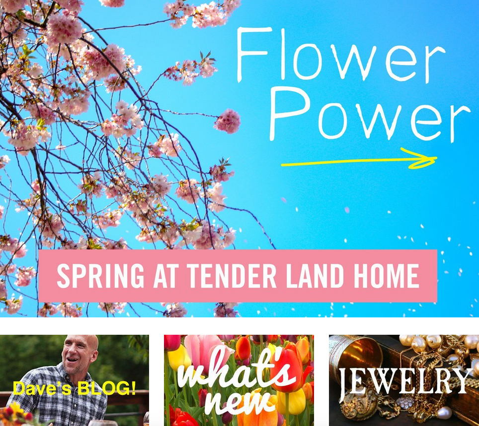 tender land home. pioneer agency.png