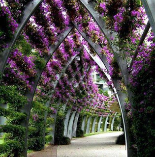SouthBank arbour Brisbane (via l andarch.c om)