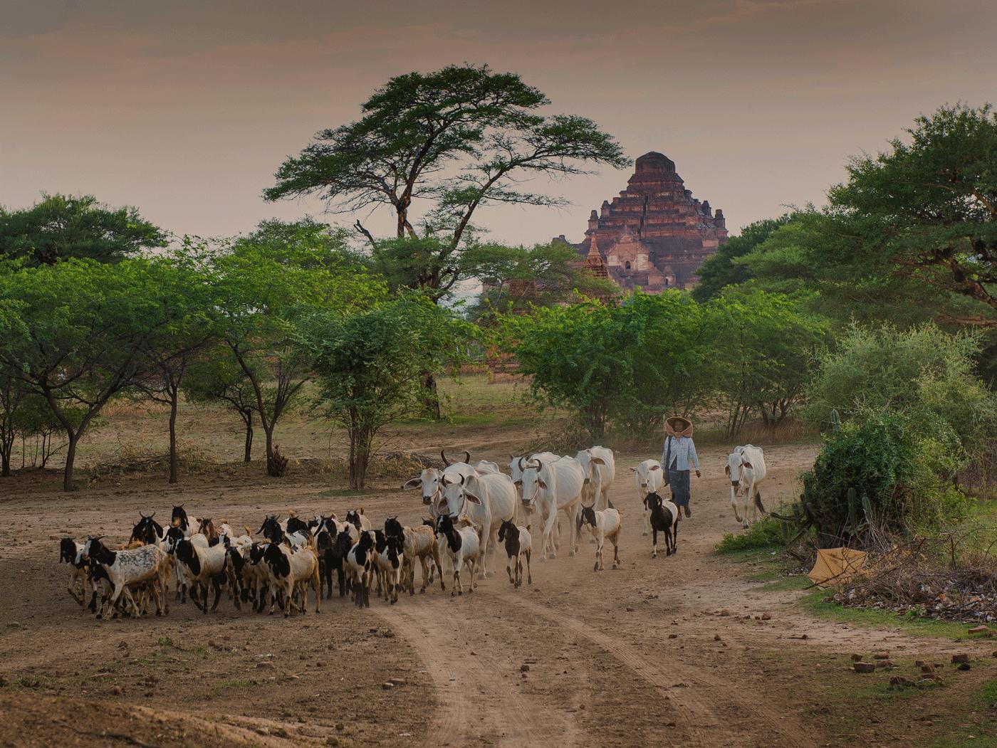 Photo Cr : Belmond Road to Mandalay  Old Bagan