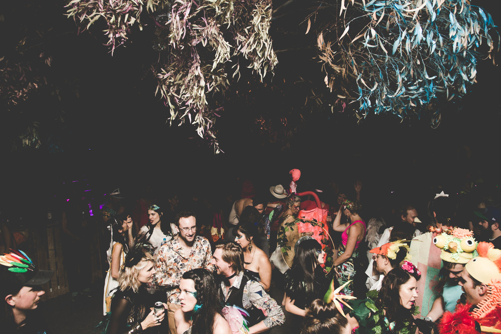 0G4A3026Birds+of+Paradise+party++2016-+photoKateLongley300.jpg