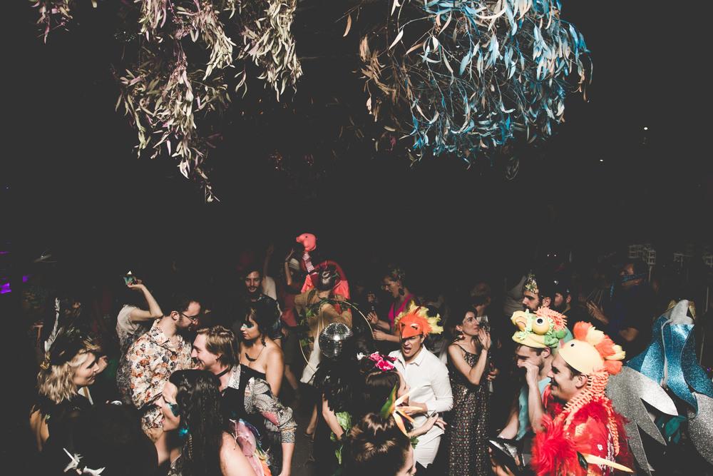 0G4A3027Birds+of+Paradise+party++2016-+photoKateLongley301.jpg