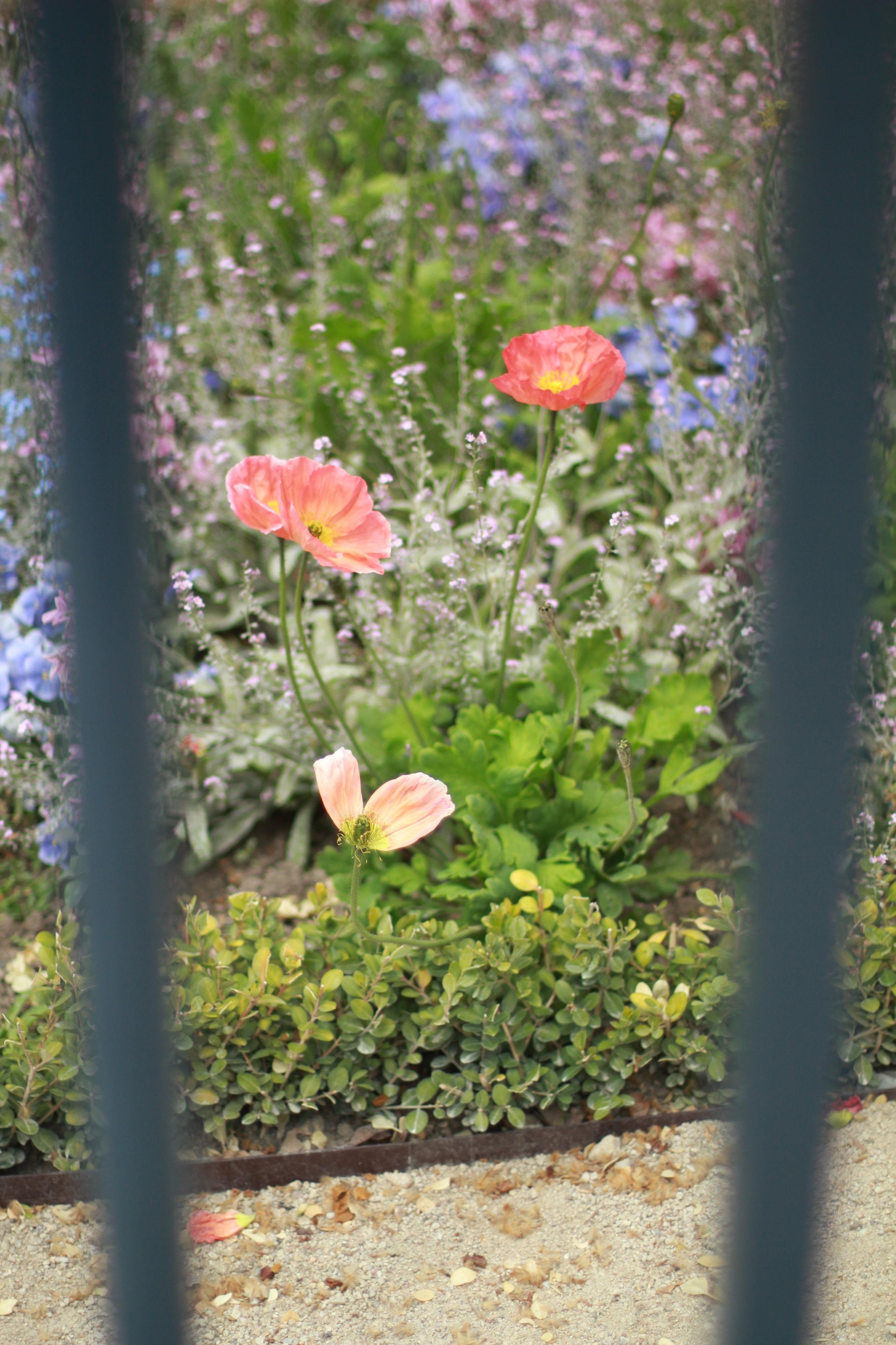 jardin du luxembourg   seekthewelfare