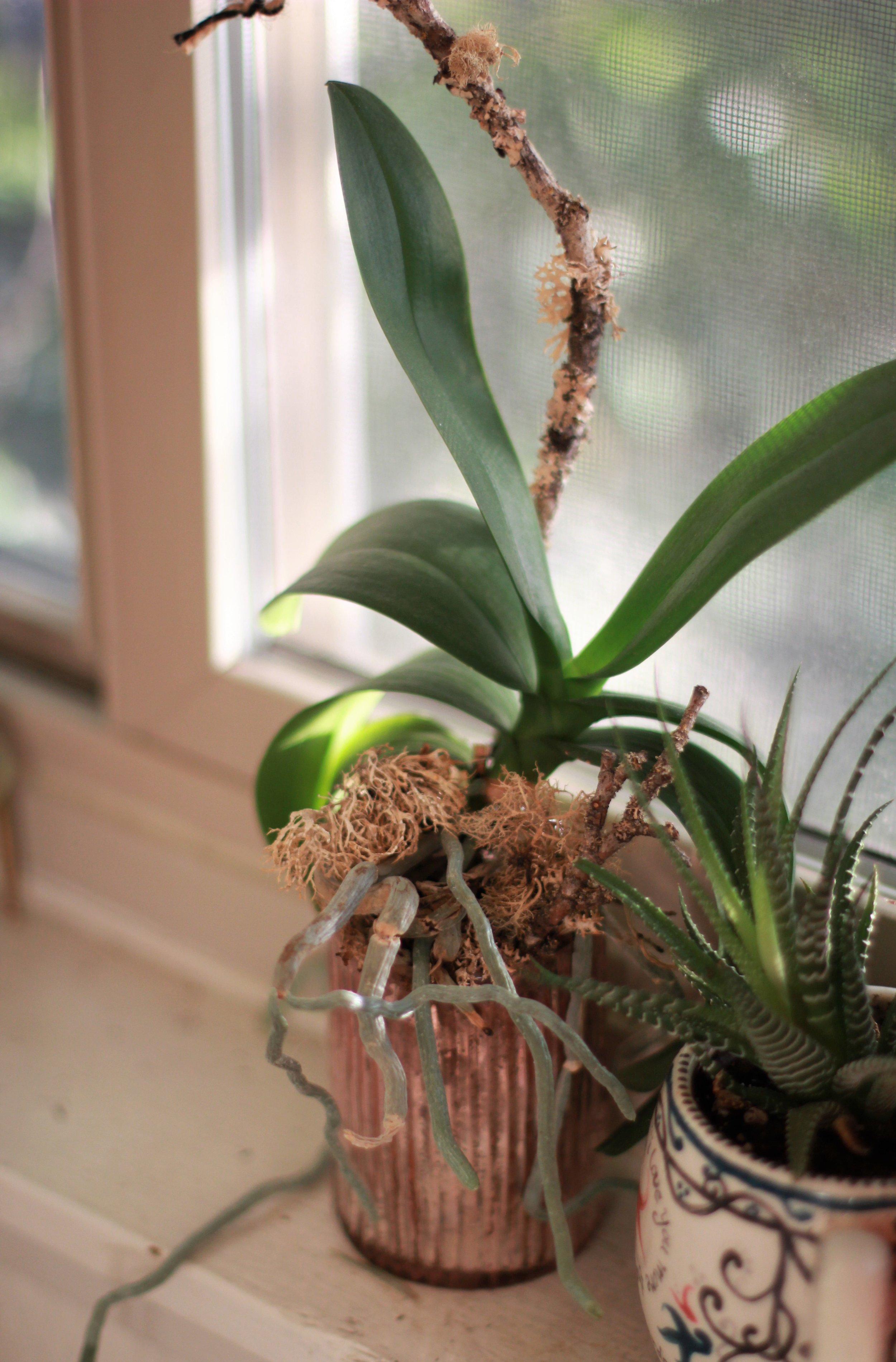 last.glances-orchid.jpg