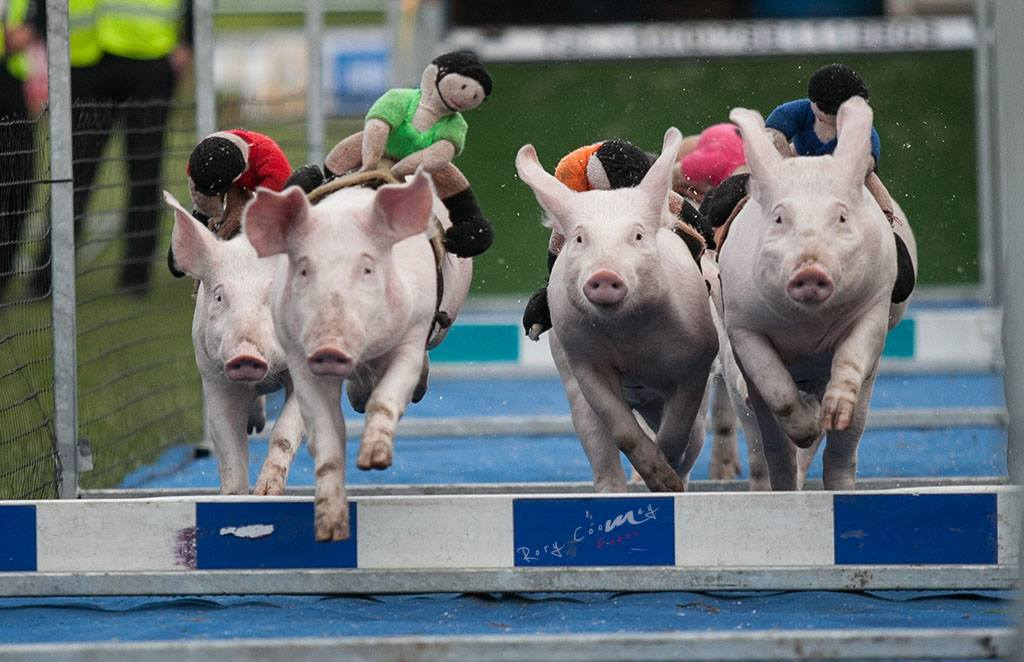 Pig'n Porter Tag Event