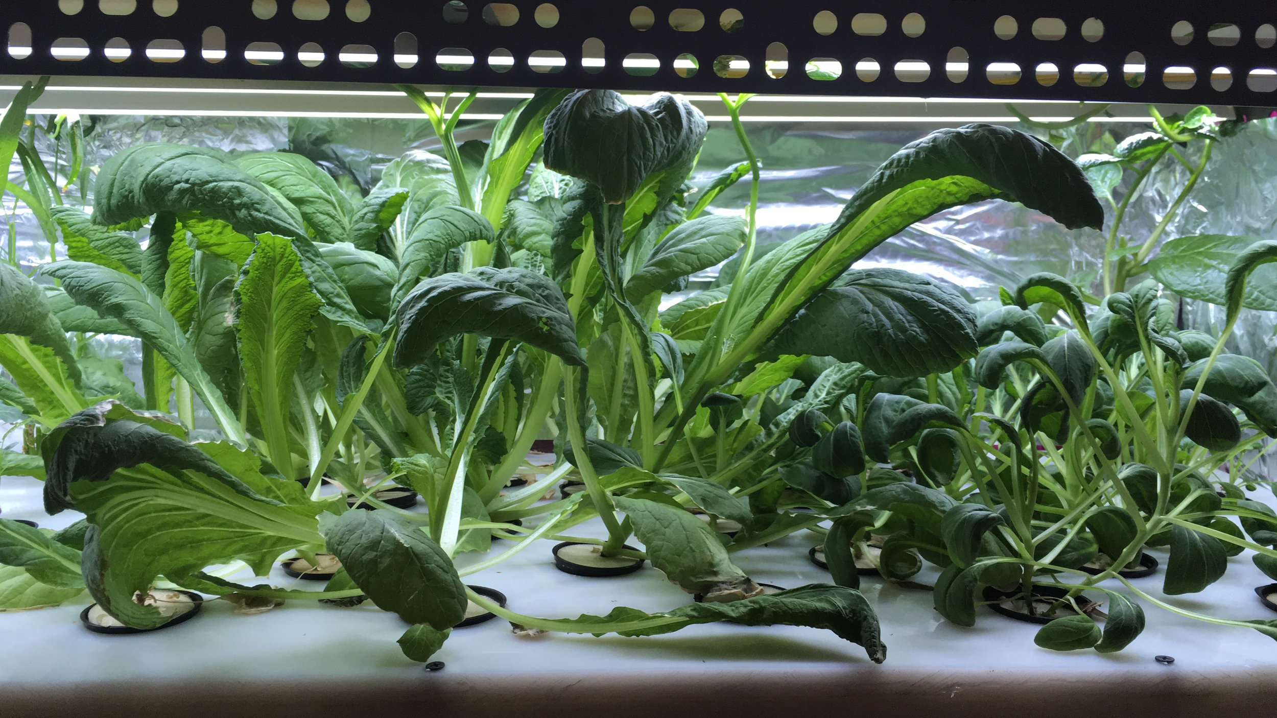Growing plants (shoot in working prototype)