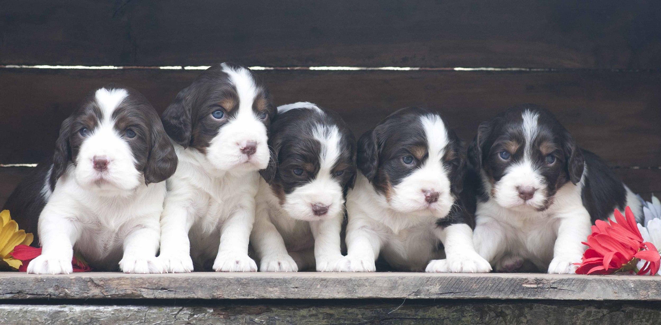 281Puppies.jpg