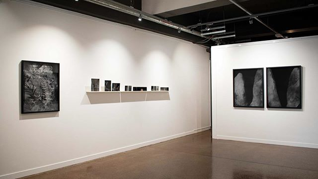 Gallery install pic of current exhibition. Tintypes 📷 Fox Galleries Collingwood Melbourne