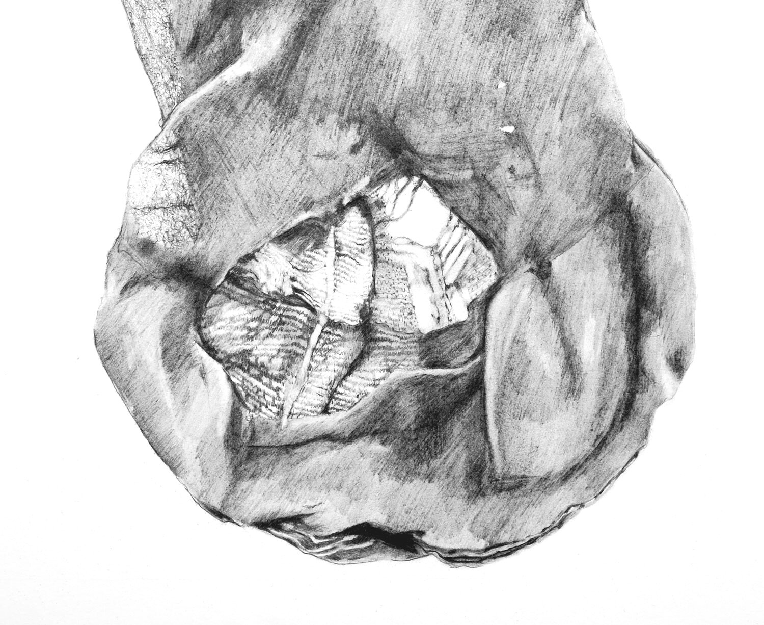 Sock (detail)   Materials:  Graphite on paper   Date of Creation:  2007