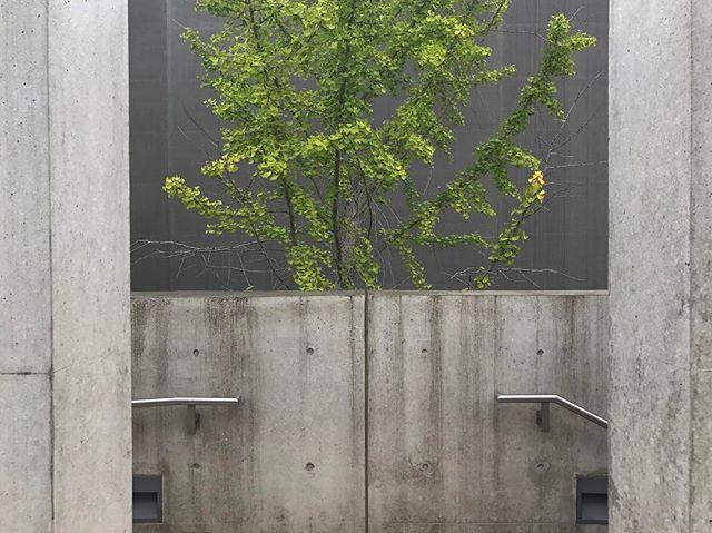 Tadao Ando vs STL.  #pulitzerfoundation #tadaoando #stlouis #fordandbrown